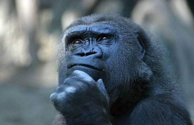 GorillaThinking